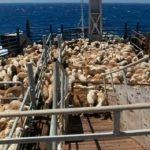 بخشنامه وزیر صنعت، معدن و تجارت درخصوص ممنوعیت صادرات دام زنده و گوشت گرم