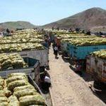 رفع ممنوعیت صادرات سیب زمینی به کشور عراق