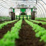 ممنوع شدن صادرات شش محصول کشاورزی به عراق
