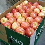 افزایش تعرفه واردات ۱۵۰ محصول کشاورزى